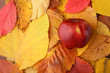 canvas print picture - Apple over autumn leaves