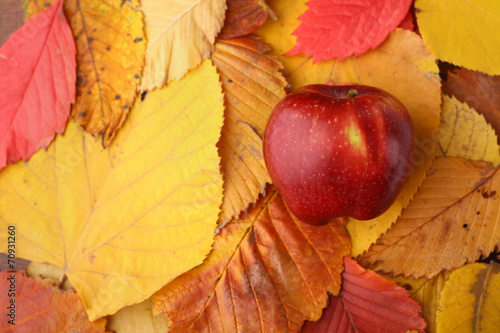 canvas print picture Apple over autumn leaves