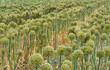 canvas print picture - Gewächshaus Knobloch Pflanzen