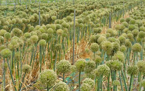 canvas print picture Gewächshaus Knobloch Pflanzen