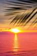 Ocean Beauty Paradise