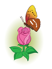 rose with bright butterfly - vector