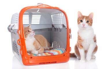 Katzen im Transportkorb
