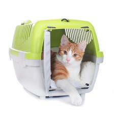 Katze im Transportkorb