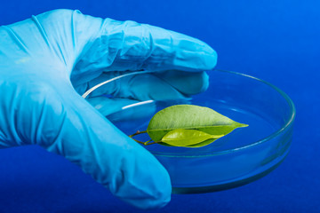scientist holding a petri dish with plant oin blue background