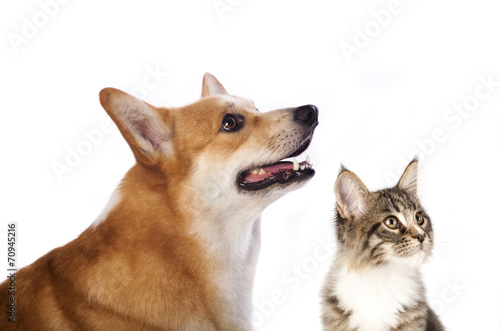 Papiers peints Chat dog and cat is looking up, portrait in profile