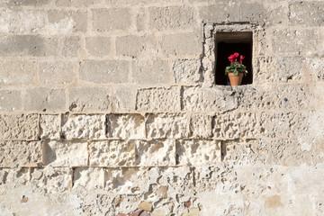 Muro con finestrella e vaso da fiori