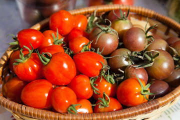 Freshly picked red and purple tomatoes
