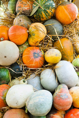 Lots of pumpkins and squash lying on hay