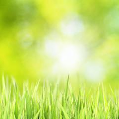 Green grass sunny bokeh
