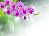 Orchids in rainy day