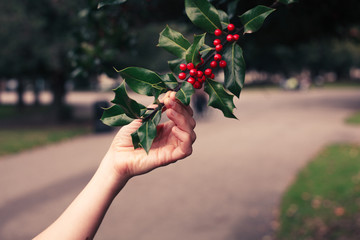 Young woman picking holly