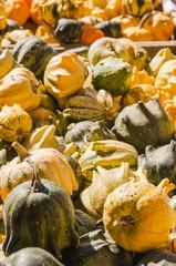 Zierkürbisse, Kürbis, Zierkürbis, Herbstfest, Fest, Schweiz