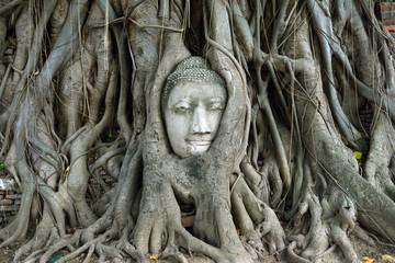 Buddha's head in tree