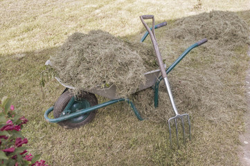 Wheelbarrow full with dry hay and pitchfork leaned on