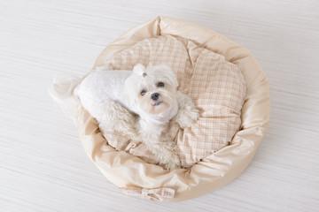 Dog on the dog bed