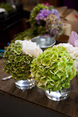 Hydrangeas in a flower shop