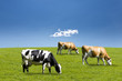 canvas print picture - Kühe auf der Weide