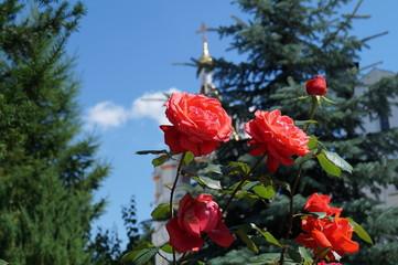 Розовый куст на фоне Свято-елисаветинского монастыря