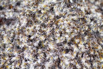 polar moss summer North macro