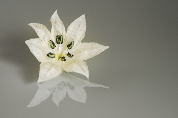 White flower petals on a reflexive surface