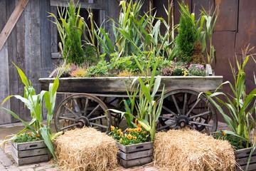 Mais und Stroh im Herbst
