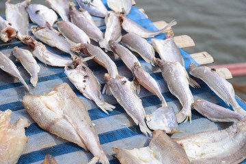 Flies on drying fish