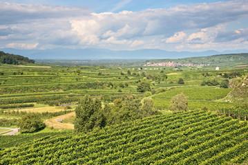 Vineyard landscape in Kaiserstuhl, Germany