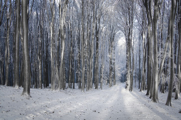 dreamy winter forest with path through frozen trees