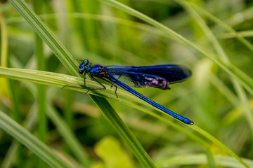 a dragonfly resting on the grass