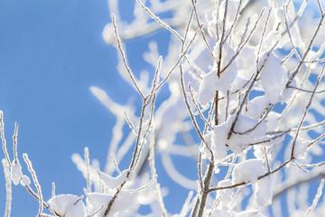 Schneebedeckte Zweige im Gegenlicht