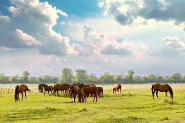 Herd in meadow