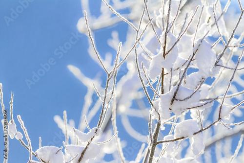 canvas print picture Schneebedeckte Zweige im Gegenlicht