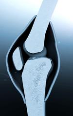 human knee, bone