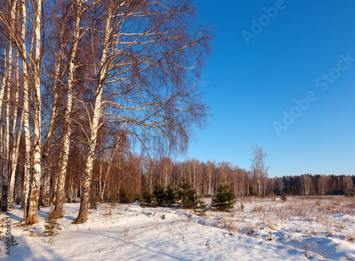 canvas print picture birch forest in  winter day