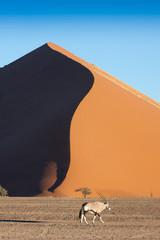 dune oryx