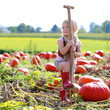 Laughing small girl playing on pumpkin field