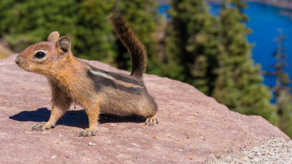 Squirrel near crater lake