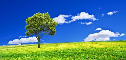 el monte se pinta de verde y azul