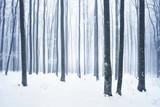 Winter snowy forest scene