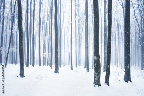 Foto op Canvas Bossen Winter snowy forest scene