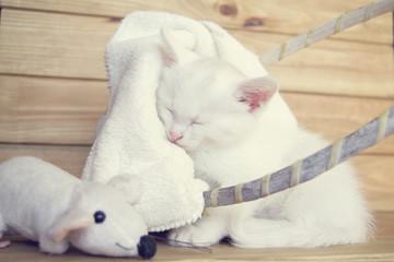 Белоснежная кошка спит