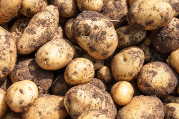 Organics potatoes