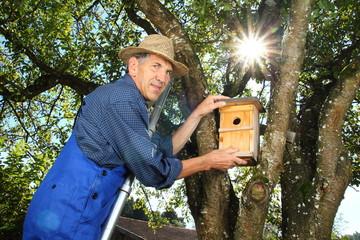 Rentner auf Leiter hängt Nistkasten in Baum