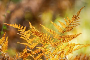 Orange fern leaf close up in autumn