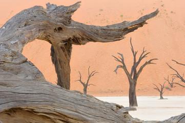 Tree skeleton at Deadvlei