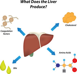 What Does the Liver Produce Labeled Diagram