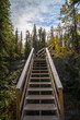 Canadian Forest Trail 2