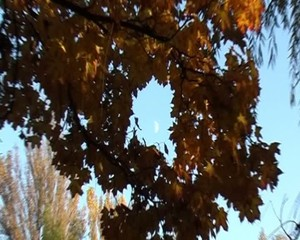 Autumn leaves and the zooming moon