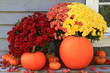 Autumn and Thanksgiving decoration